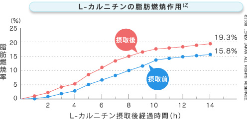 L-カルニチンの脂肪燃焼率