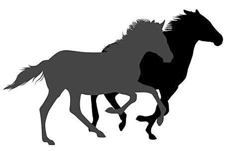 シミやたるみの改善や美肌効果のある馬プラセンタ